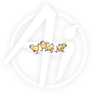 Chicks - F1840