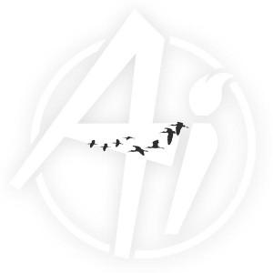 Migrating Birds - G3234