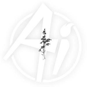 Mountain Pine - H3250